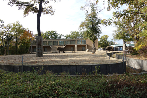 20181020 berlin zoo elphant 1-1.jpg