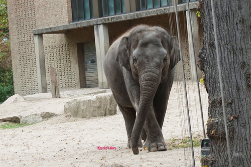20181020 berlin zoo elphant 1-10.jpg