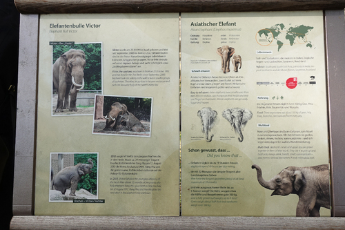 20181020 berlin zoo elphant 1-11.jpg