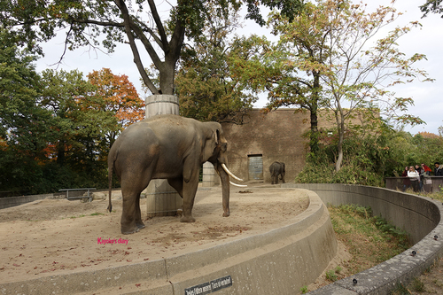 20181020 berlin zoo elphant 1-12.jpg