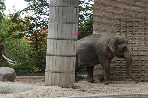 20181020 berlin zoo elphant 1-14.jpg