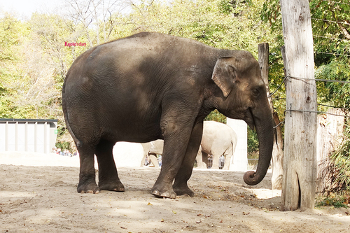 20181020 berlin zoo elphant 1-16.jpg