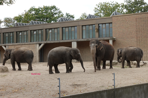 20181020 berlin zoo elphant 1-7.jpg