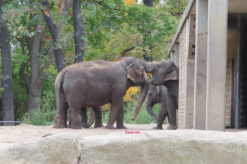 20181020 berlin zoo elphant 1-9.jpg